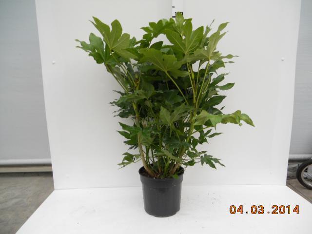 Oddone - Albenga - webshop all\'ingrosso - Ordini online piante in ...
